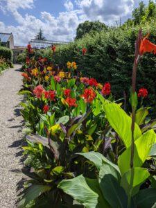 Blumen im Berggarten